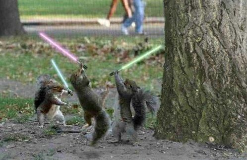 jedi_squirrel.jpg