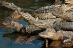 1-alligator-pool-party.jpg