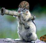 army_squirrel.jpg