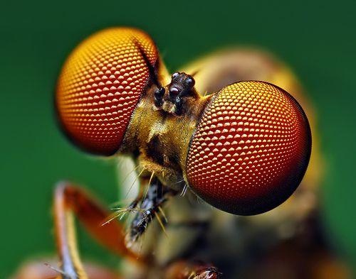 bug-eyes15.jpg