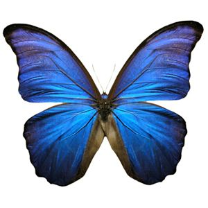 butterfly_deep_blue.jpg