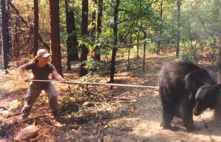 Poking Bears.jpg