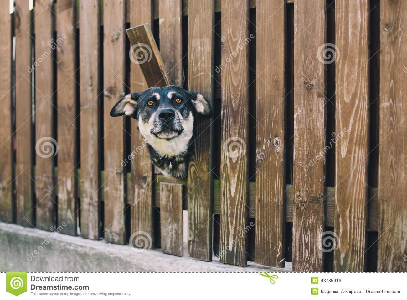 dog-looking-hole-fence-curious-43785416.jpg