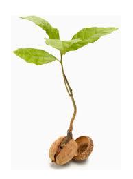 seedling-transparent.png
