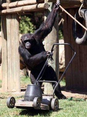 monkey_green.jpg