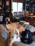 hounds_chaise_smaller.jpg