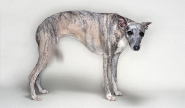 dog_tail_legs_2 copy.jpg