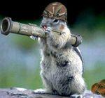 army_squirrel.jpg